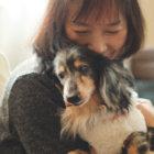 【取材】19歳7ヶ月のミニュチュアダックス「ほたる」〜大好きな家族と共にゆったり歩む毎日〜