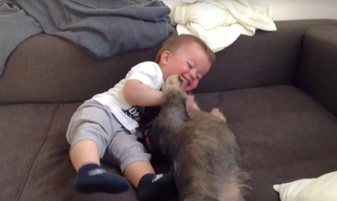 ダックスフンド,赤ちゃん