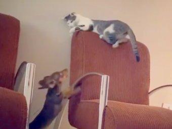 ダックスフンド,猫