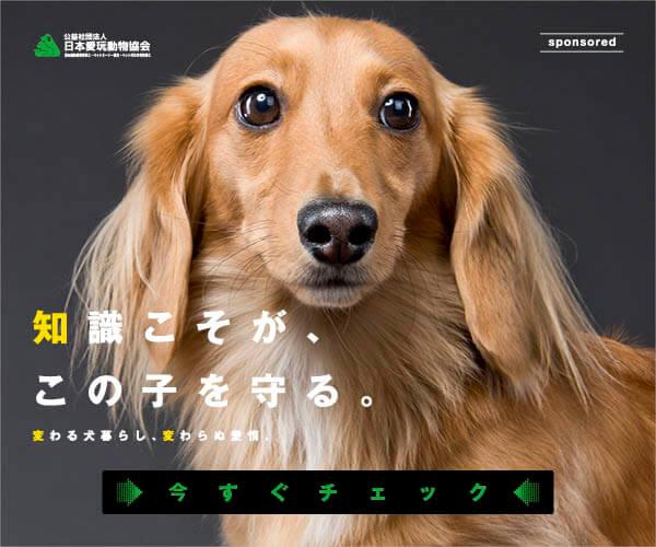 愛玩動物飼養管理士,ダックスフンド